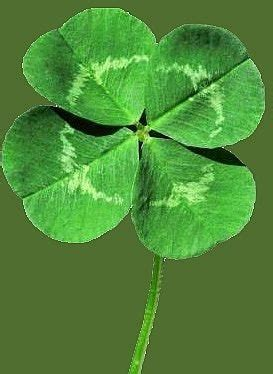 find   leaf clover ehow