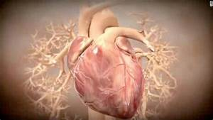 Studies  Stem Cells Reverse Heart Damage