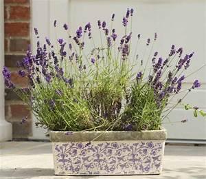 Pot De Fleur En Terre Cuite : pot de fleur terre cuite parfait pour la d co de jardin ~ Premium-room.com Idées de Décoration