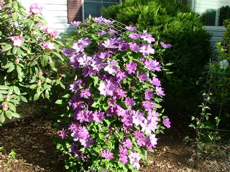 Landscaping Ideas Tips Perennial Container Gardening