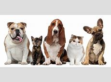 Rabies Clinic Events Calendar Sussex County, Virginia