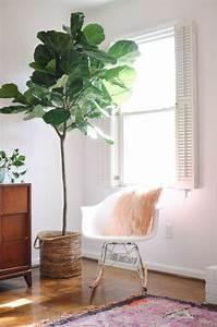 figuier en interieur fleurs plantes flowers plants With chambre bébé design avec epilobe a petites fleurs plante