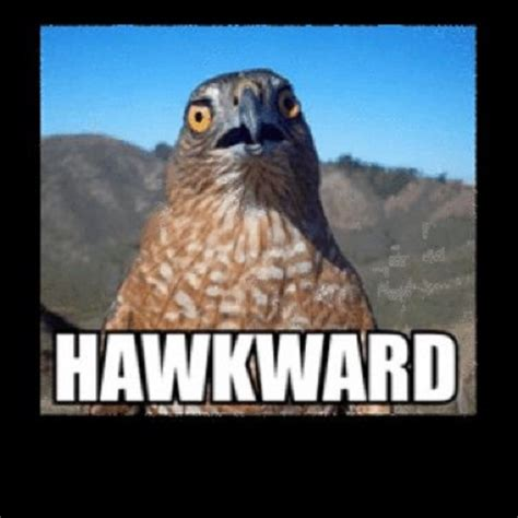 Hawkward Meme - hawkward funny animal meme