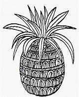 Pineapple Coloring Printable Drawing Preschoolers Colour sketch template