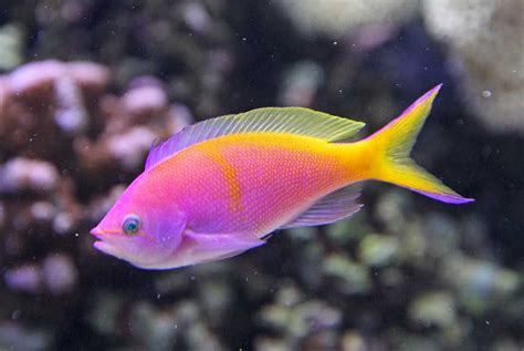 The Meaning And Symbolism Of The Word Fish
