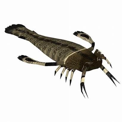Pterygotus Silurian Animals Zt2 Wiki Wikia Zt2downloadlibrary