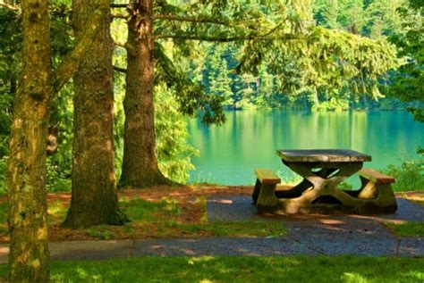 picnic table forests nature background wallpapers