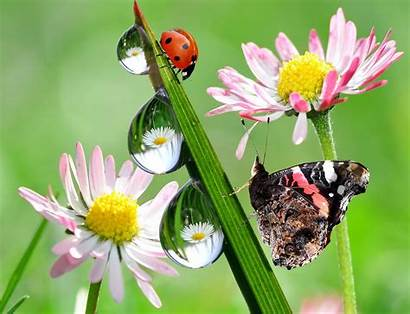 Ladybug Butterfly Flowers Nature Reflection Drops Wallpapers