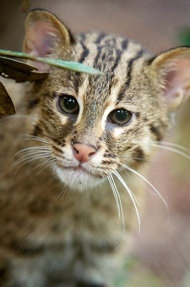 baby fishing cats   zoos cute factor