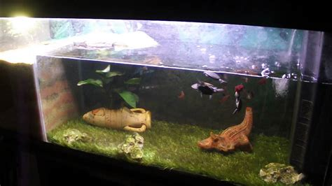 aquarium tortue de floride tortue pelomedusa aquarium 240 litres