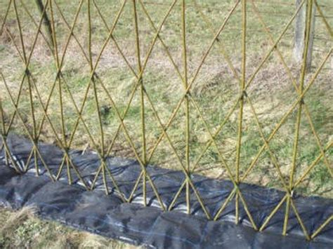 beautiful examples  living willow fences diy projects