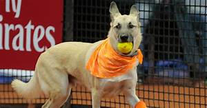 Shelter Dogs Serve As 'Ball Boys' At Brazil Tennis Open ...