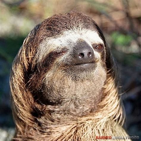 eating  bowls  rice pictures  sloths