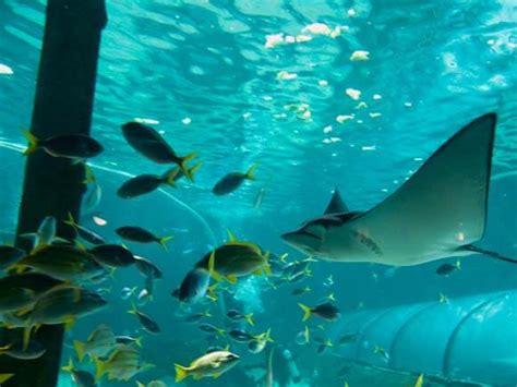 discounts sea sydney aquarium racq