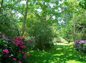 Arbre à Croissance Rapide Pour Ombre : best 20 arbre ombre ideas on pinterest plantes d 39 ombre ~ Premium-room.com Idées de Décoration