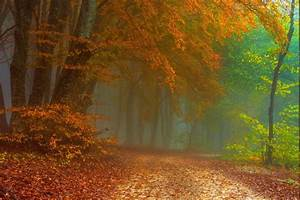 Path, Mist, Forest, Fall, Leaves, Nature, Landscape
