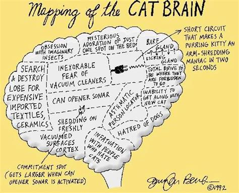 Mapping Of Cat Brain