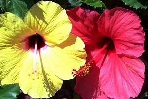 Die Schönsten Balkonpflanzen : bl hende aussichten die sch nsten balkonblumen ~ Markanthonyermac.com Haus und Dekorationen