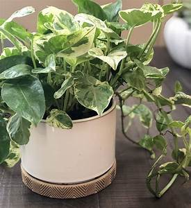10, Low-light, Indoor, Plants, The, Can, Thrive, In, Your, Home, And, Office