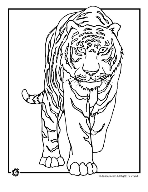 Coloring Pages Animals by Graceful Animal Best Colouring Pictures On