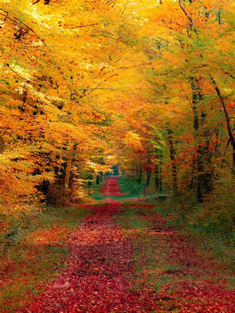 Fall Wallpaper For by Fall Wallpaper Gallery