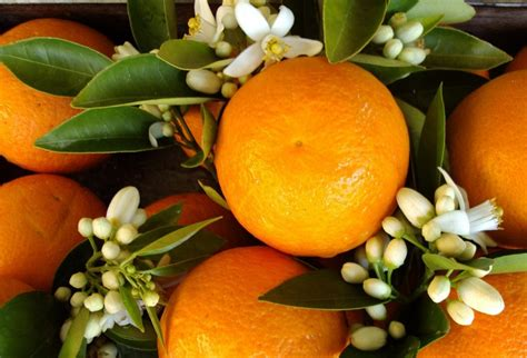 bouquet sposa fiori d arancio bouquet con fiori d arancio gli accostamenti pi 249 belli