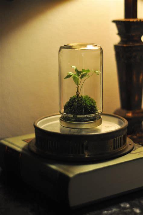 jar terrarium on jar terrariums yes and know