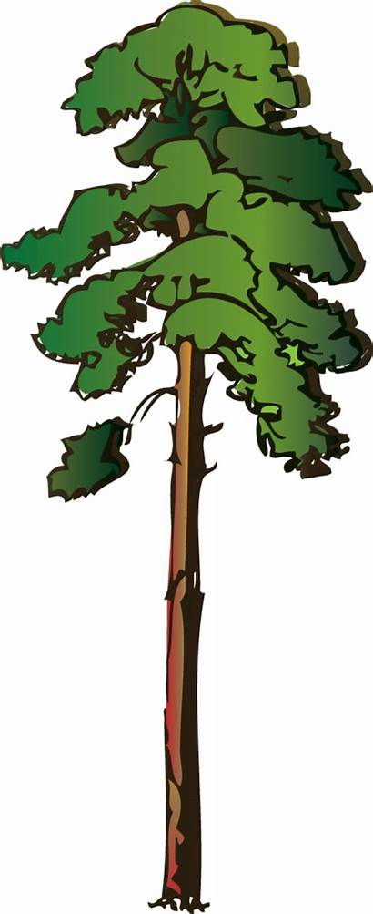Tall Clipart Thin Trees Clipground Clipartix