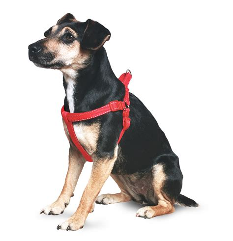 ancol dog black padded harness