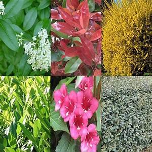 Arbuste Persistant Croissance Rapide : kit de haie croissance rapide pour 10 m plantes et jardins ~ Premium-room.com Idées de Décoration