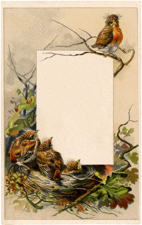 vintage robin label  graphics fairy