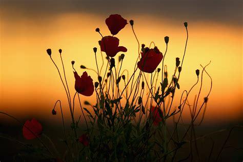 world war centenary   ypres  flanders