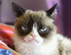 grumpy cat pictures breed personality history