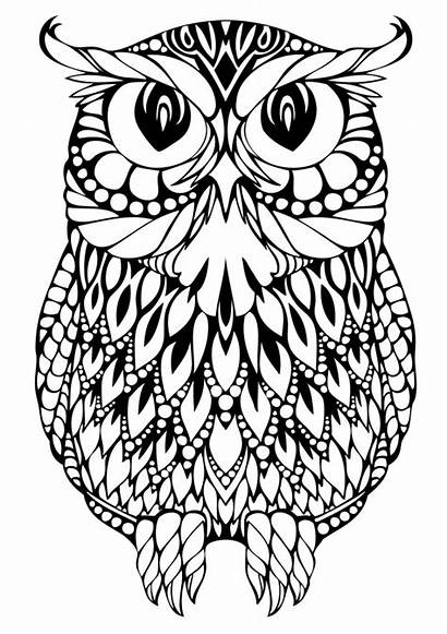 Owl Coloring Printable Pages Adults Detailed