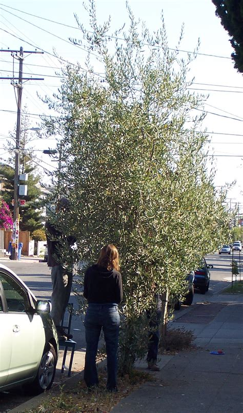 local ecologist eat street trees