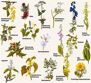 Pflanzen Bestimmen Nach Bildern : welche pflanzen sind f r hunde giftig hundegitter ~ Eleganceandgraceweddings.com Haus und Dekorationen