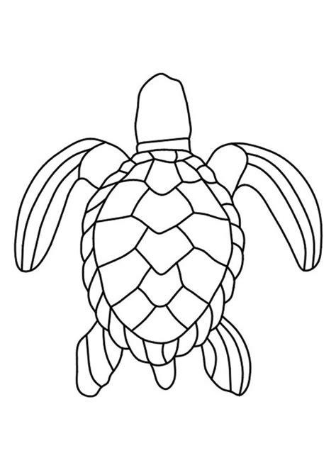 disegni  tartarughe da colorare pianetabambiniit