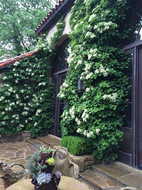 36 Best Images About Karen Stillwell Rear Garden On