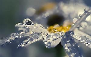 rain drops on flower wallpaper - Responsive
