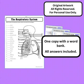 respiratory system diagram personal   anatomy