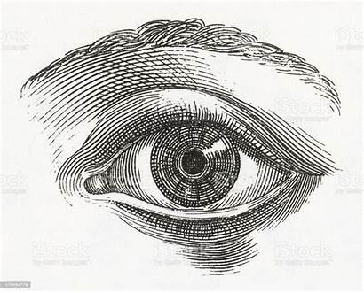 Eye Engraving Human Illustrations Occhio Engraved Illustrazione