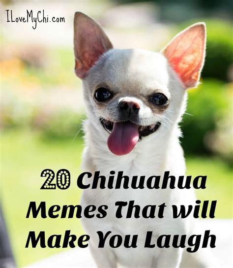 chihuahua memes     laugh funny