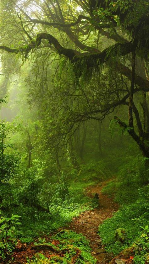 Wallpaper Summer Forest, 5k, 4k Wallpaper, Green, Trees, Leaves, Grass, Nature #582