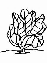 Lettuce Coloring Vegetables Printable Coloringcrew Recommended Mycoloring sketch template
