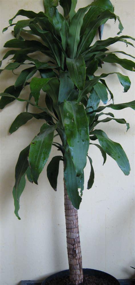 rental tanaman  bunga surabaya