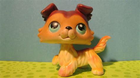Brown Collie Puppy Dog #58