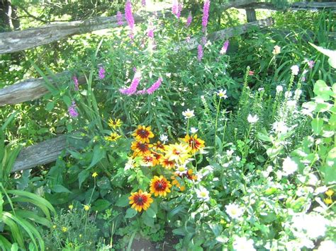 17 Best Images About Flowers And Split Rail Fences On