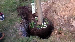 Planter Un Olivier En Pleine Terre : planter un olivier en pleine terre id es d coration ~ Farleysfitness.com Idées de Décoration
