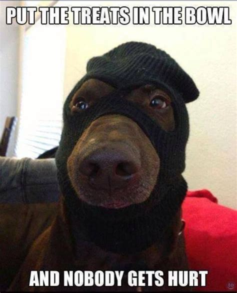 Pics Meme - best 25 dog memes ideas on pinterest cute dog memes smiling dog meme and laughing dog meme