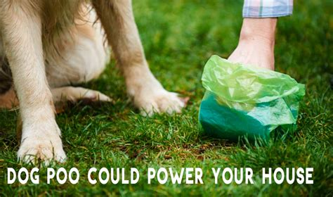 woman designs  device  converts  dogs poo